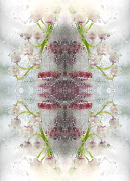 Lily of the valley in ice - kaleidoscopic