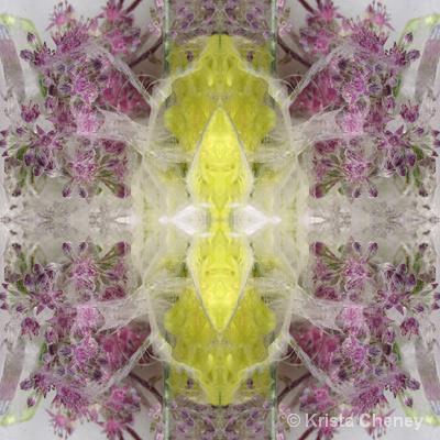 Sedum in ice II - kaleidoscopic