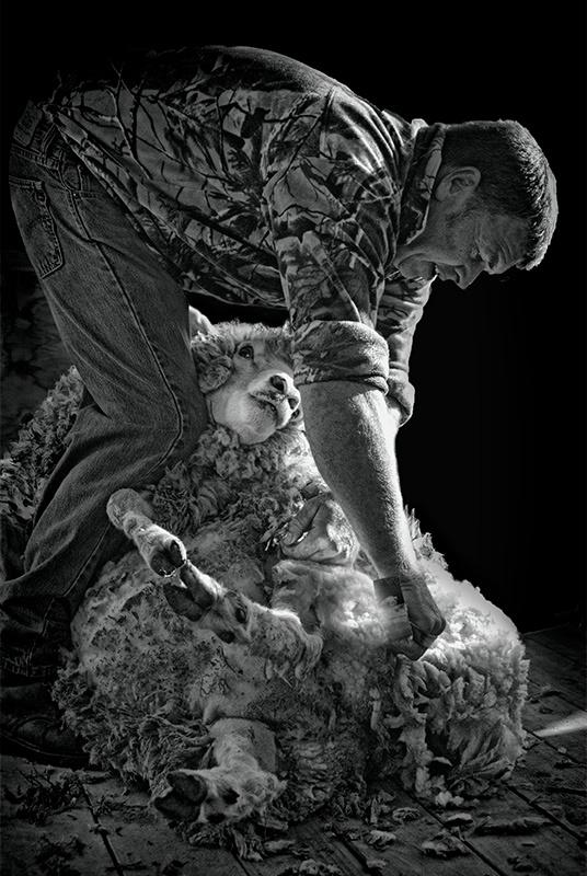 Old Way Shearing
