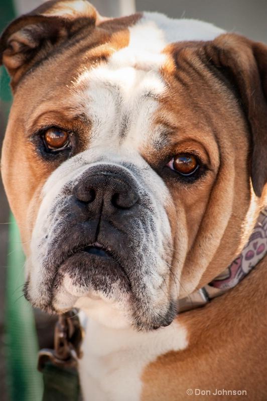 LA Dog