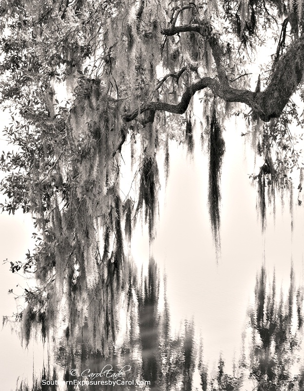 Oak and Moss Reflecting