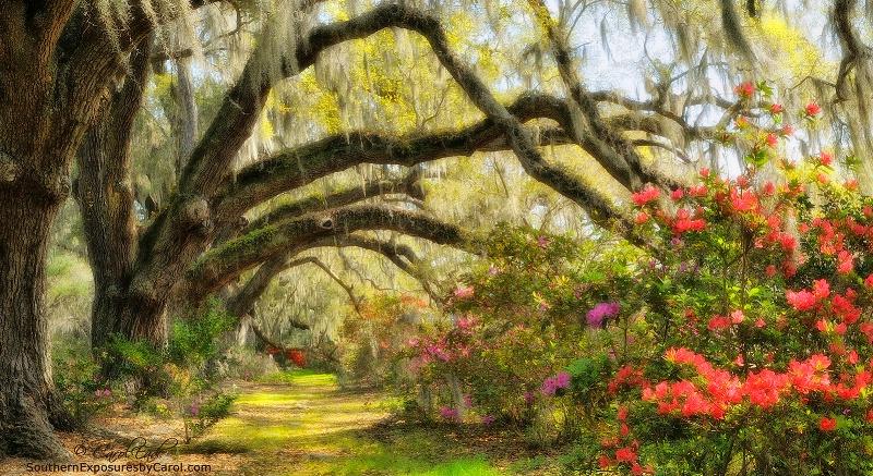 Magnolia Gardens Oak Lane