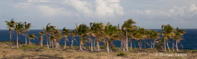 big island-32
