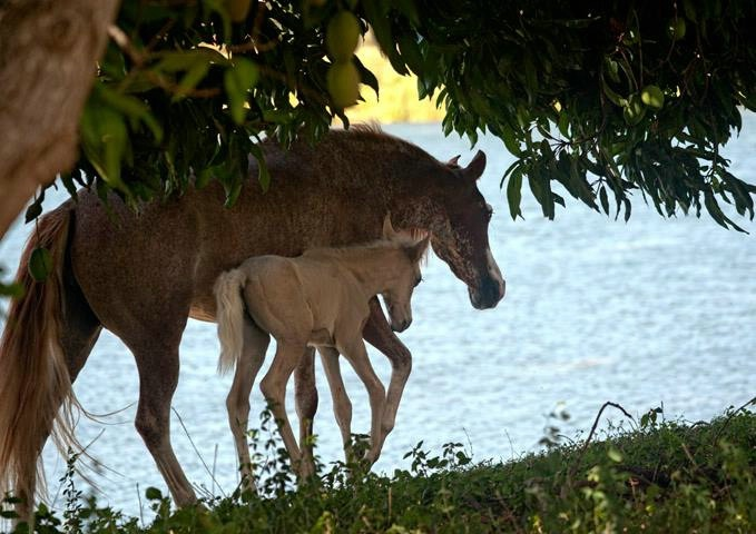 Mare & Filly