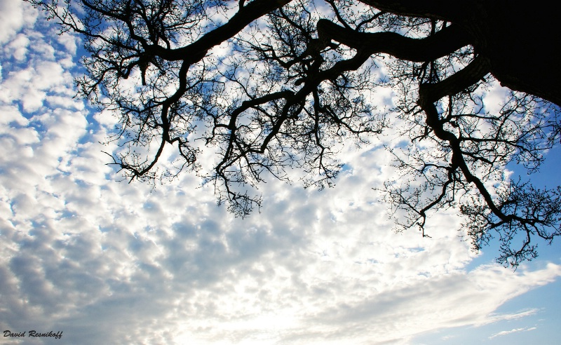 Tree Trunk, Branches and Cloudy Sky