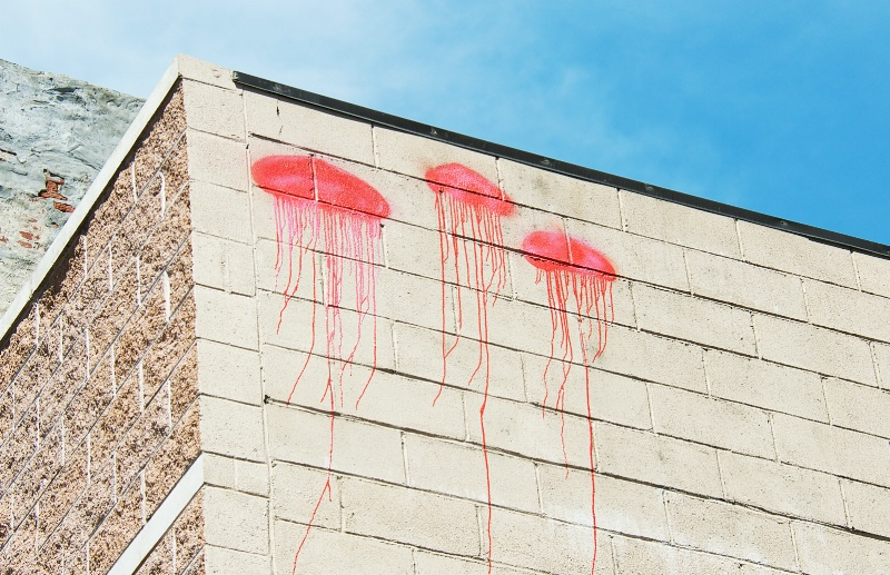 Jelly Fish on the Wall
