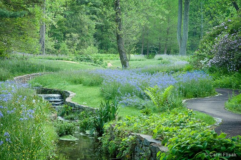 Rivers of Blue ~ Chanticleer Gardens
