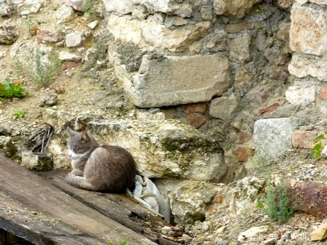 cat among the ruins