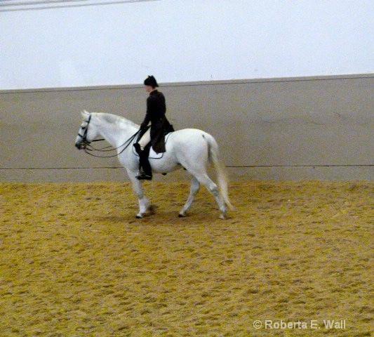 lipenstein horses training school