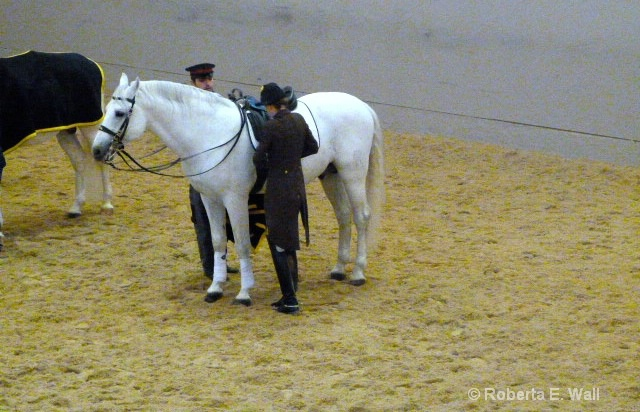 riding school while training
