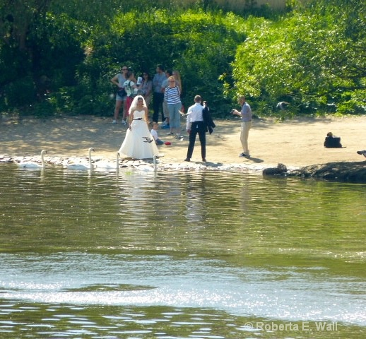 the swans at the wedding