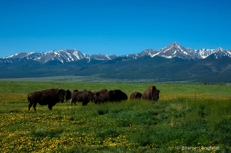 buffaloonpinesroad