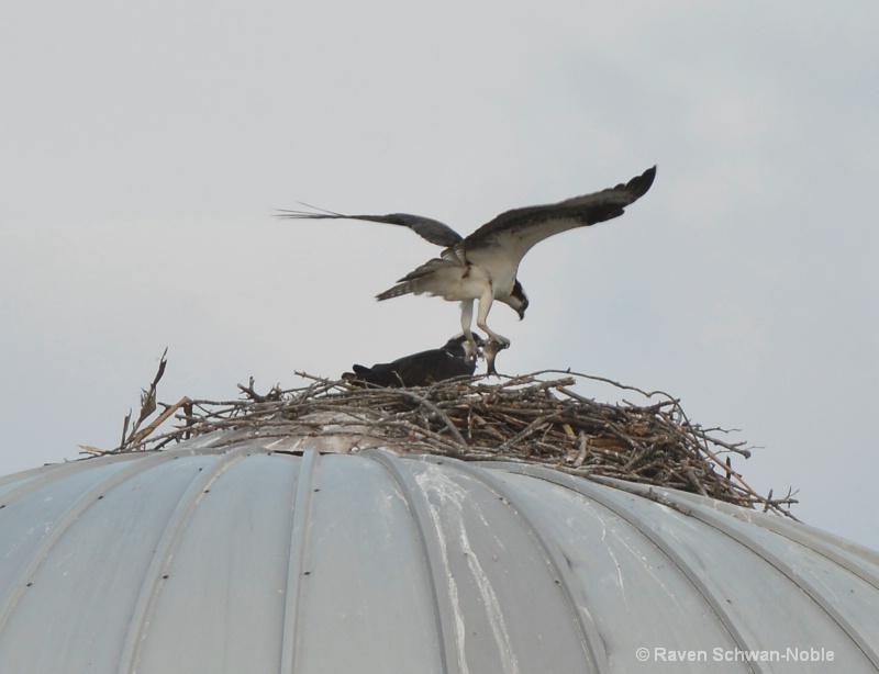 Silo nesting