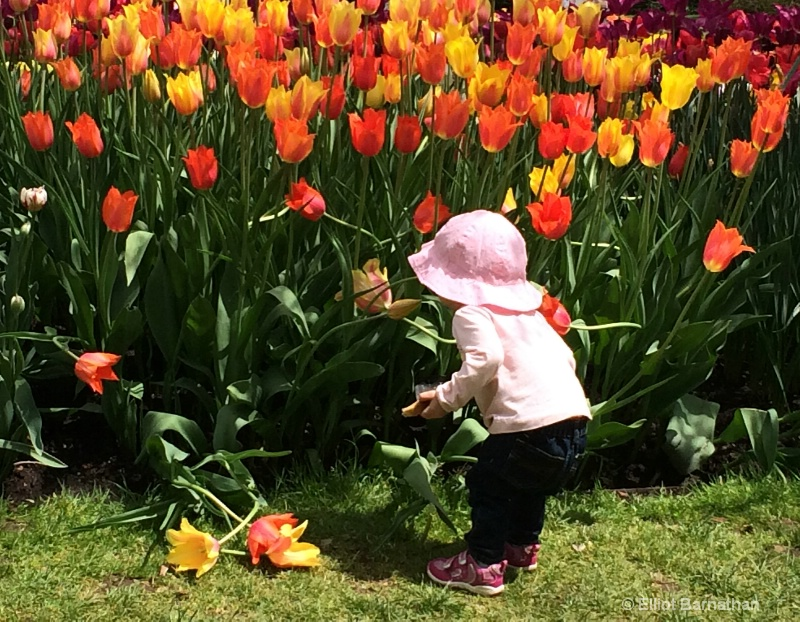 Stopping to Smell the Flowers