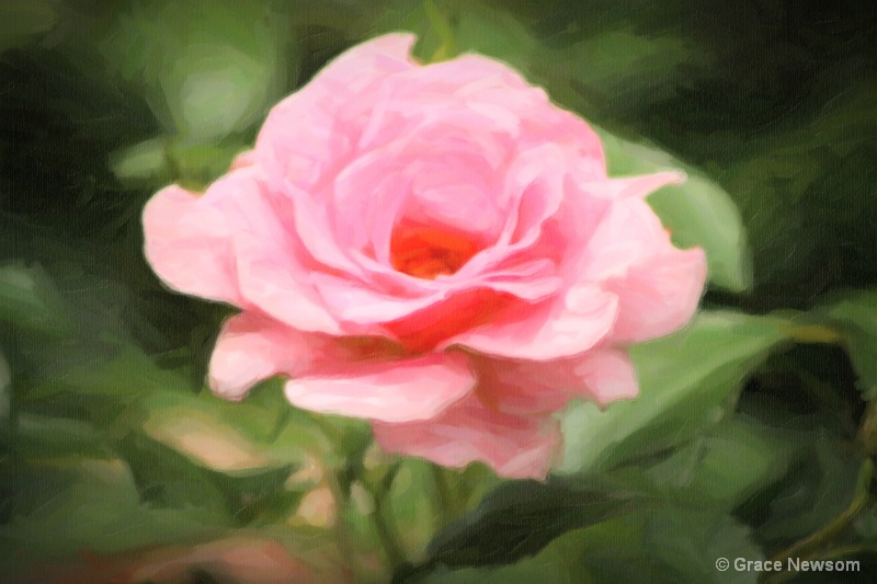Chapel Rose Painting