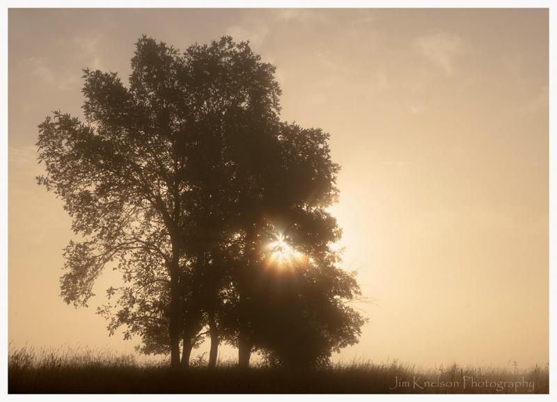 Tree and Prairie Sunrise