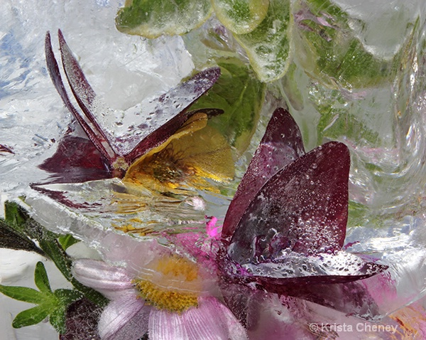 Oxalis and yellow bell in ice