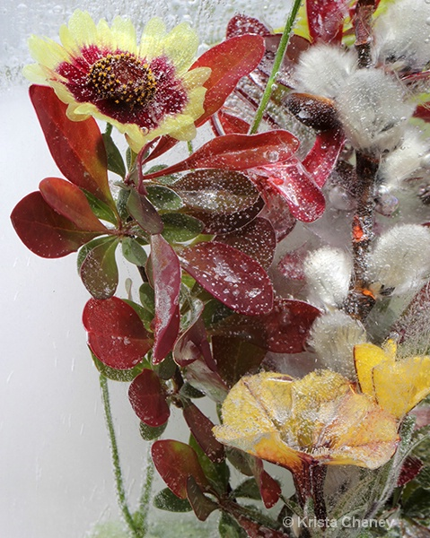 Barberry, coreopsis, and yellow bell in ice