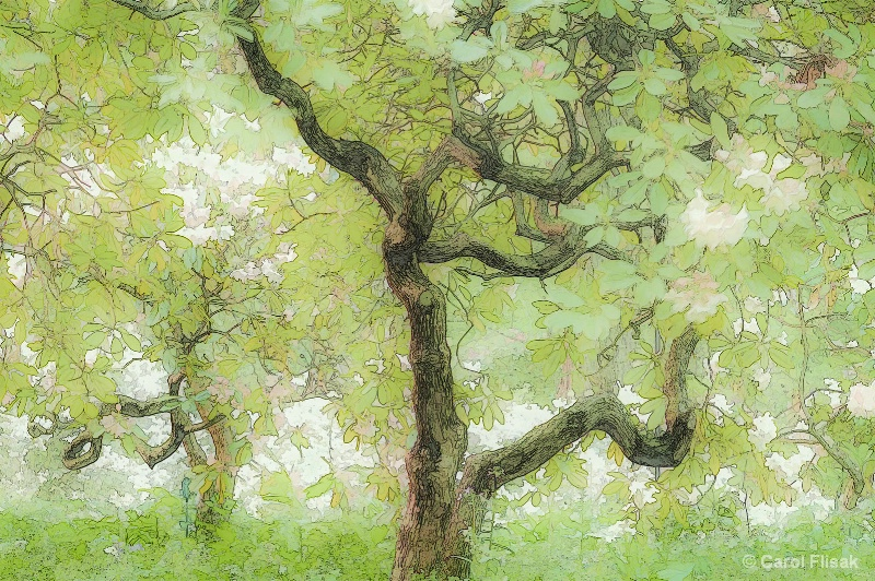 Two Trees Dance for Spring