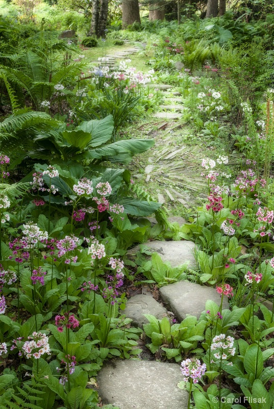 A Path in the Woods ~ Chanticleer