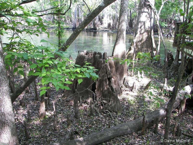 Springs and Wetlands