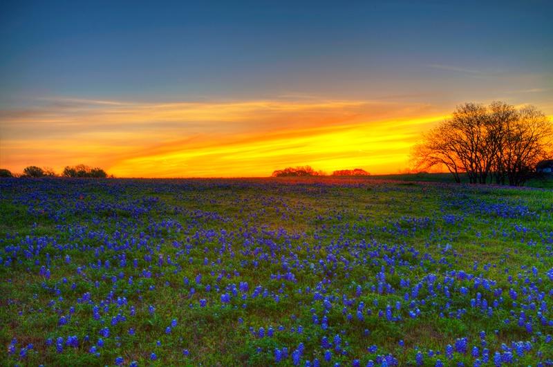 +Texas**Spring+