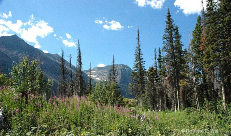 meadows in the glaciers