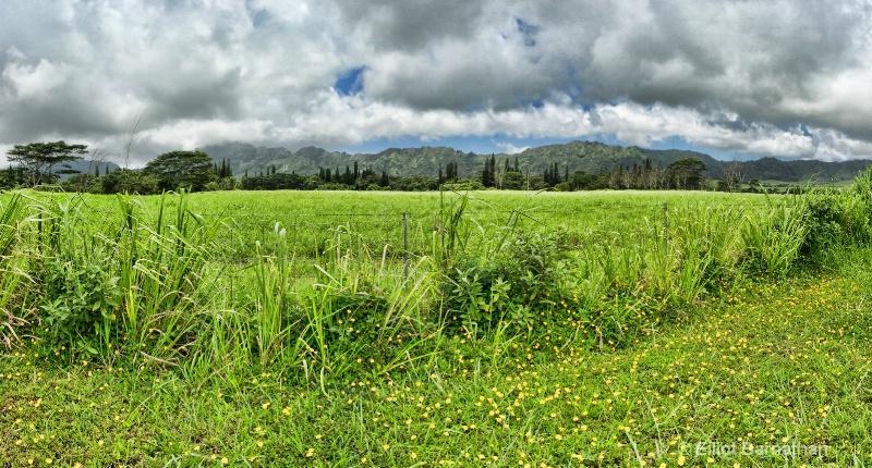 Kauai 37