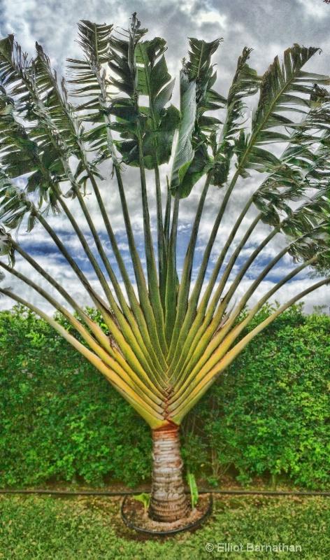 Hawaiian Flowers 19