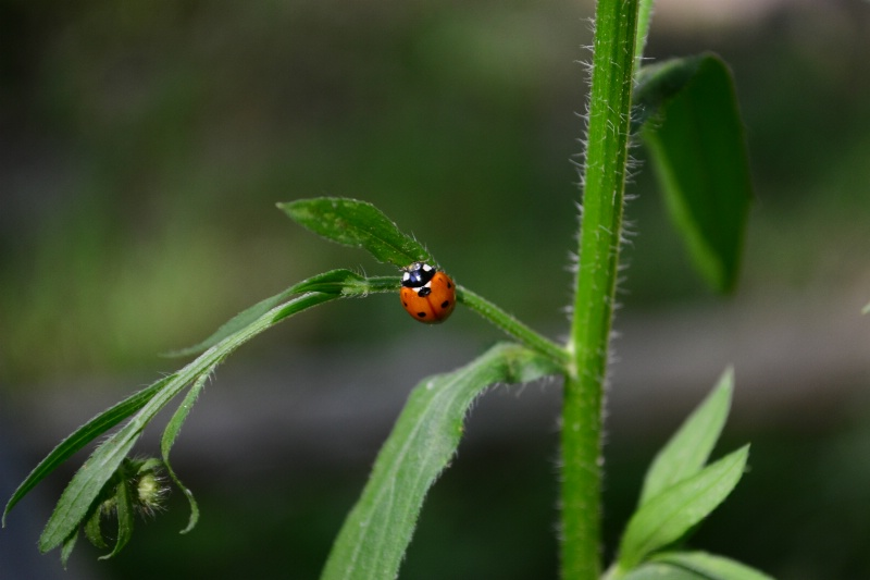 Lady bug going up!