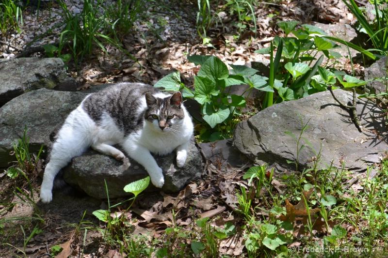 Kily the Cat