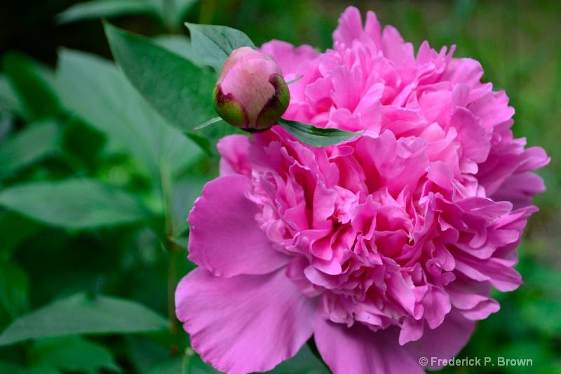 Flower & Bud