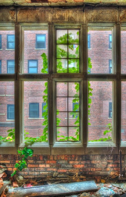 Broken Windows and Vines