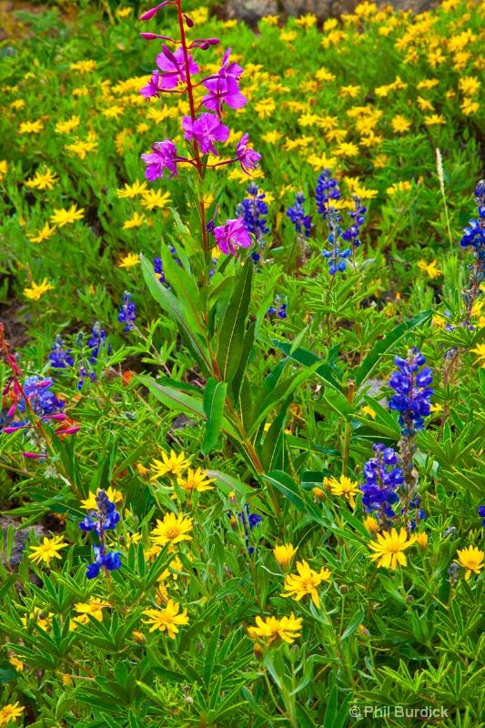 Cottonwood Pass Bouquet