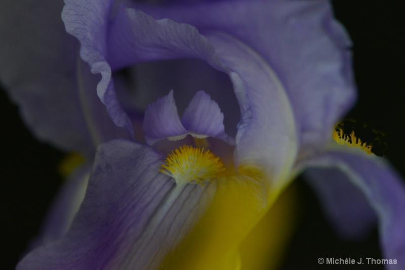 Lovely Purple !