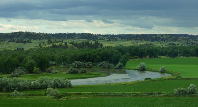 Montana Greenery