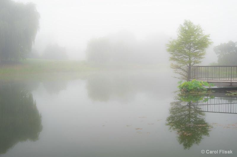 Silence in the Fog