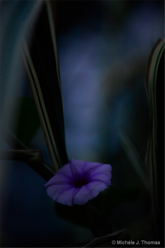 Lovely Lavender !
