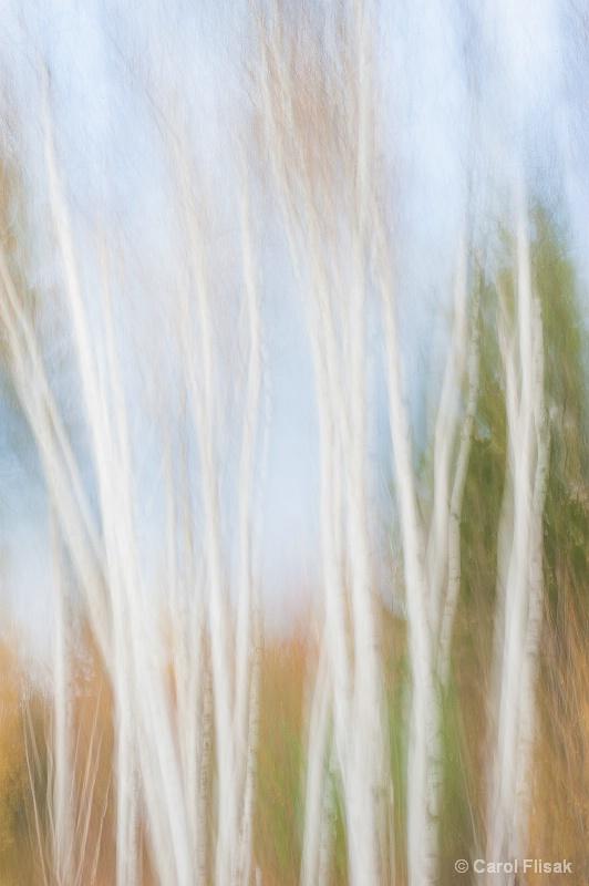 White Birches Blur