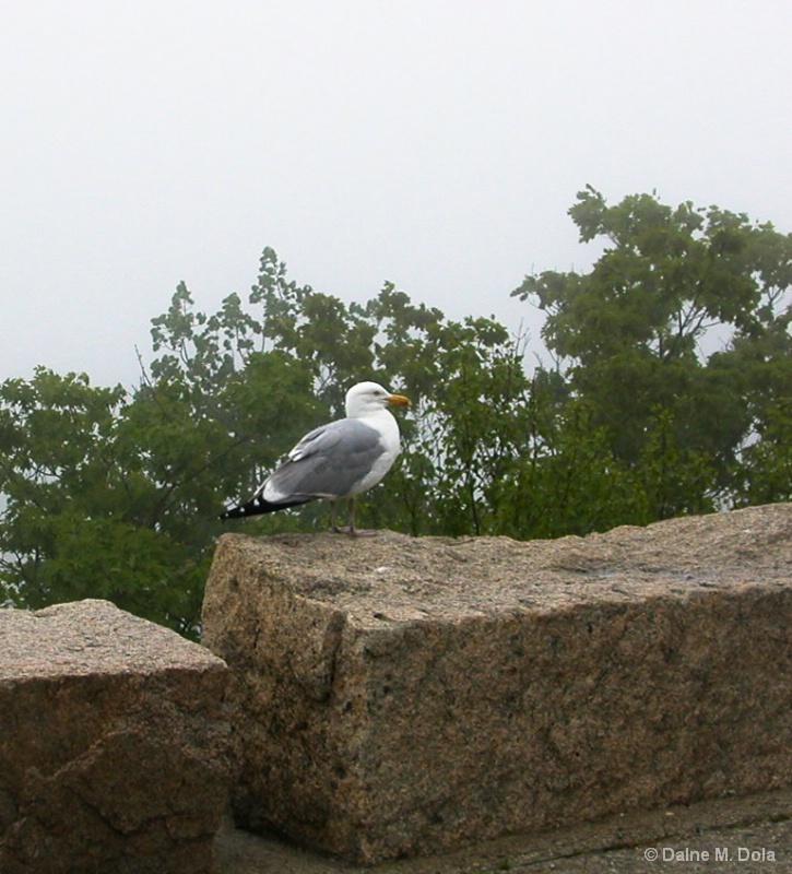 A Gull and Granite
