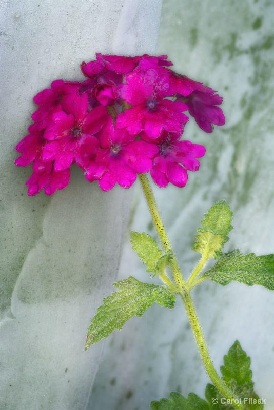 Flower on Succulent