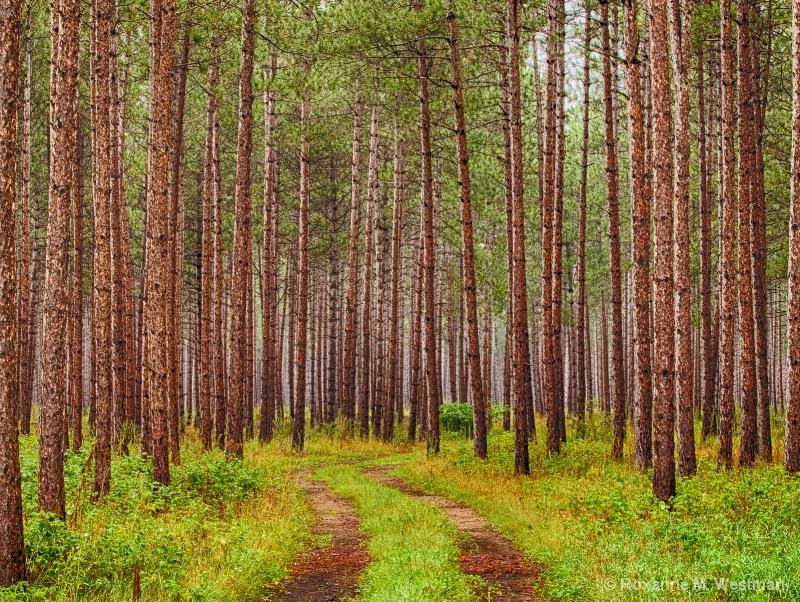Rainy day in woods