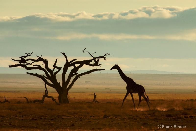 A Samburu morning