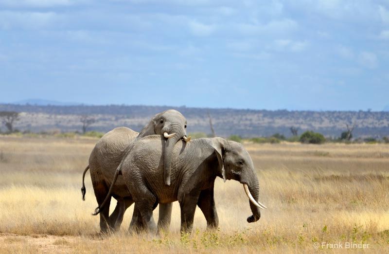 Playing in Amboseli