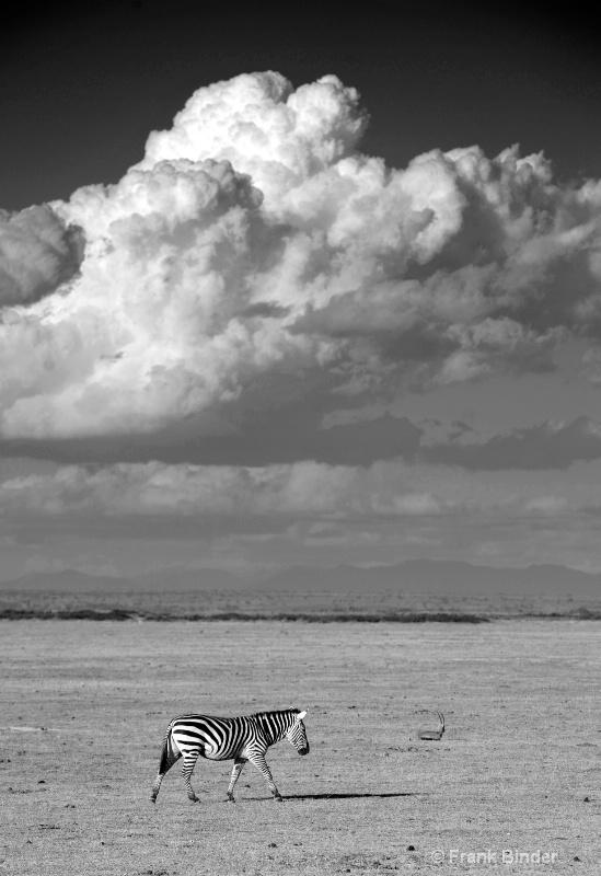 Crossing Amboseli