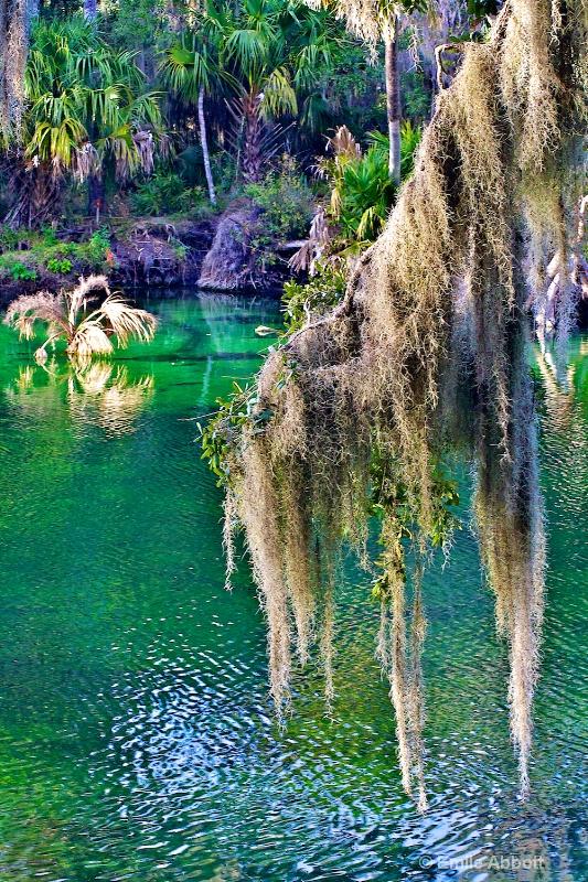 Blue Spring Natural Area, Florida