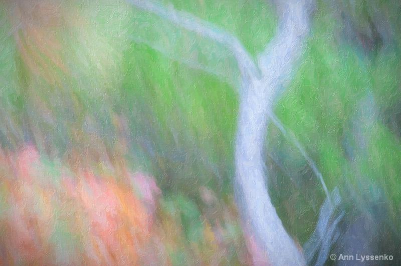 Soft Birch