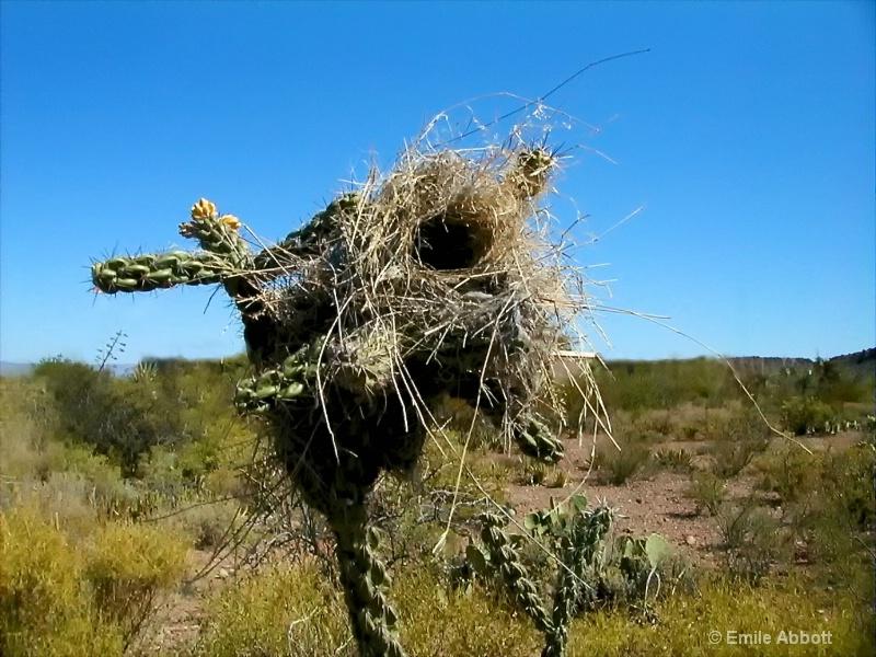 Close up bird nest in Cholla Cactus