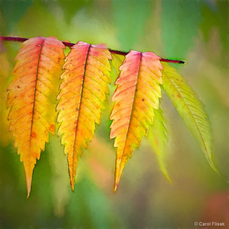 Sumac in the Fall