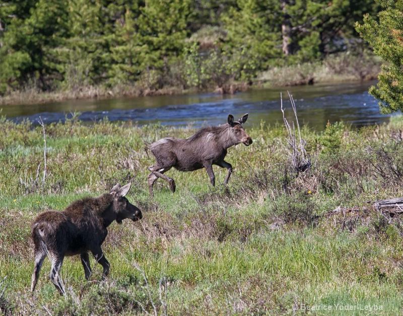 mg 5068 two moose